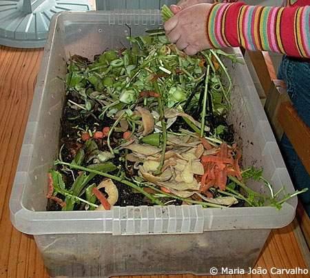 compostagem apartamento
